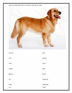 Interactive worksheet Animal Careers - Knowing the parts of a dog