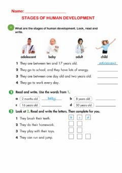 Interactive worksheet Stages of human development