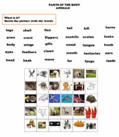 Interactive worksheet Parts of the body animals