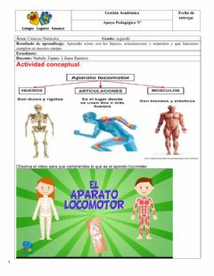 Interactive worksheet Sistema locomotor