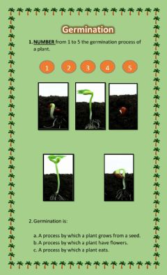 Interactive worksheet Germination