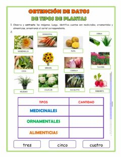 Interactive worksheet Tipos de Plantass