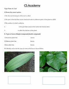 Interactive worksheet All about  leaves