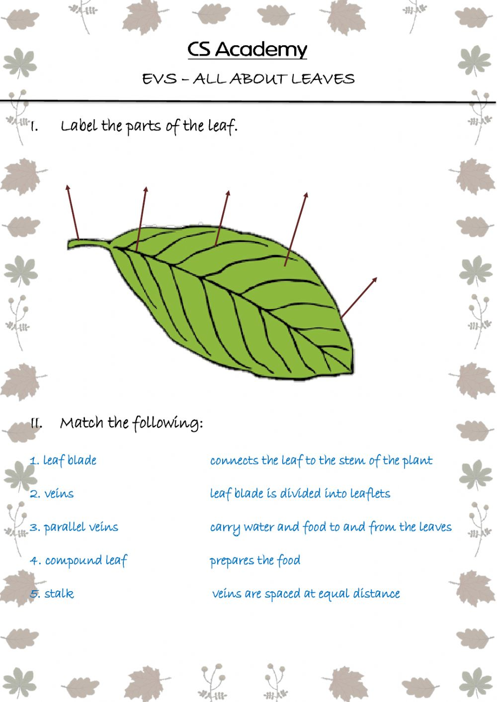 All about leaves worksheet