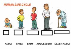 Ficha interactiva Human life cycle