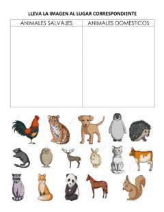 Interactive worksheet Animales domésticos y salvajes
