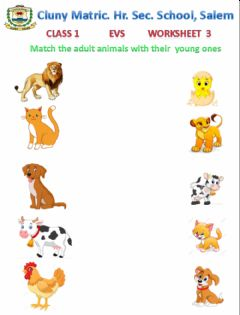 Ficha interactiva Class 1 EVS 3 - Animals and their young ones