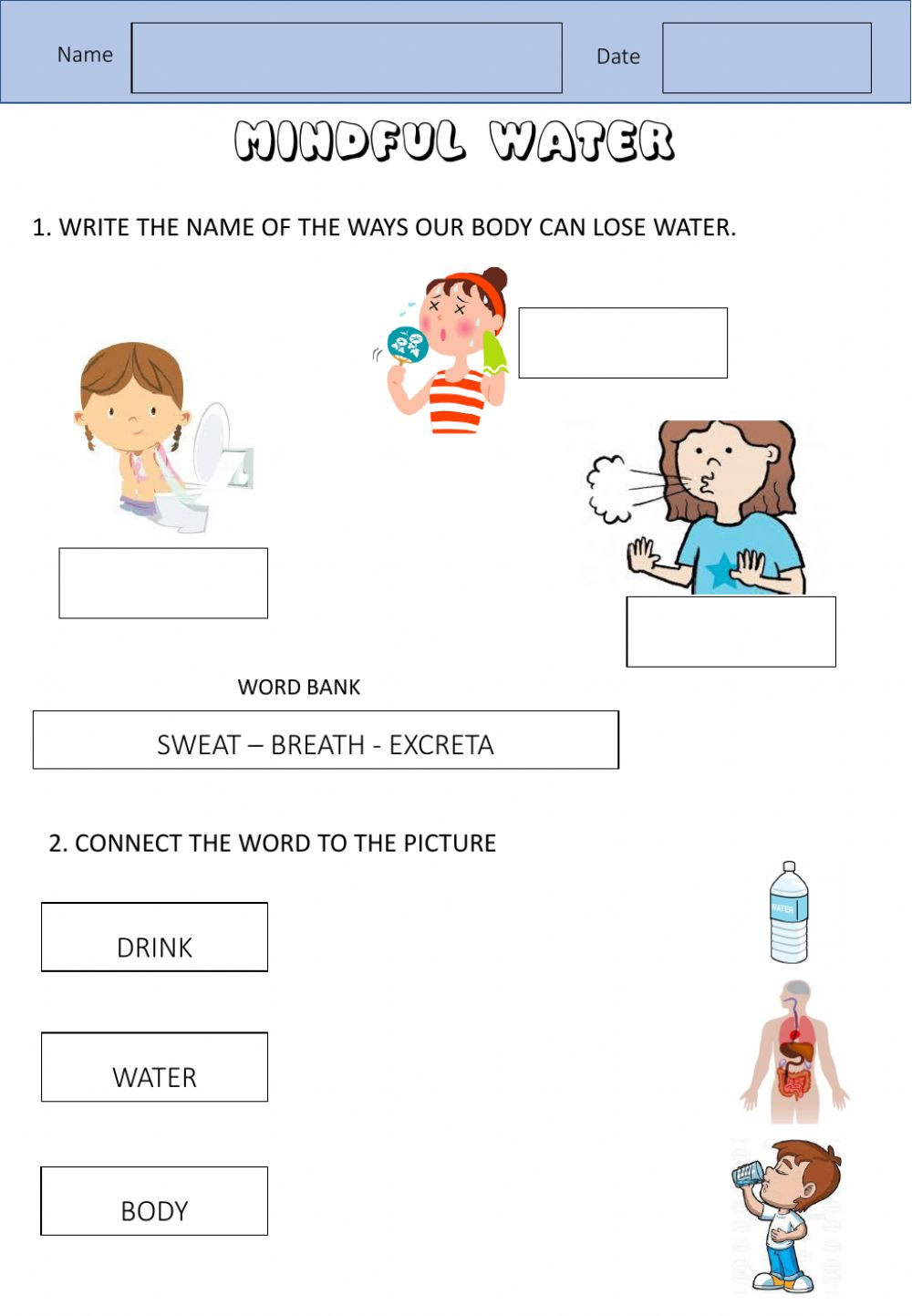 Water To The Body Worksheet