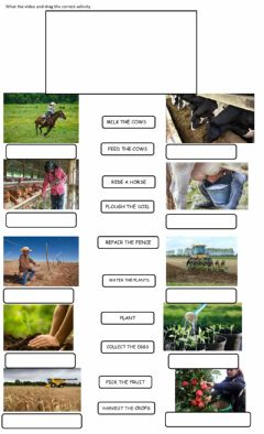 Interactive worksheet The city and the country