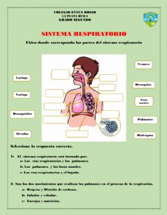 Interactive worksheet Sistema respiratorio