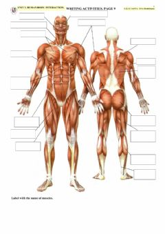 Interactive worksheet HUMAN BODY. INTERACTION. Page 9