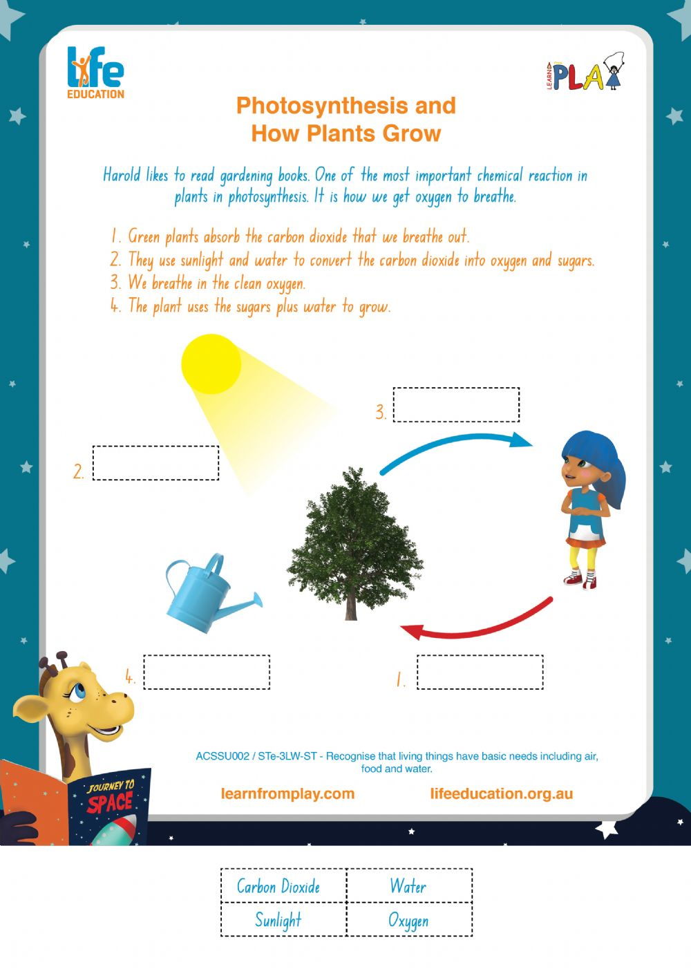 Library Liftoff - Photosynthesis - Interactive worksheet