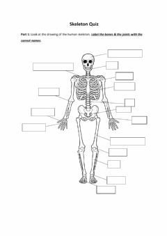 Interactive worksheet Skeleton