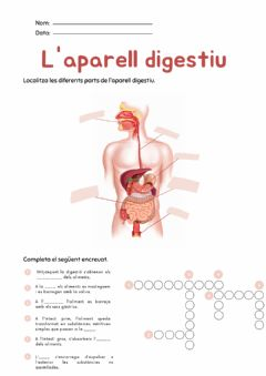 Interactive worksheet Aparell digestiu