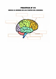 Interactive worksheet Cerebro