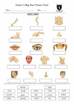 Ficha interactiva Label the body parts (drag and drop)