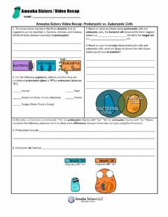 Interactive worksheet Amoeba Sisters Prokaryotic v Eukaryotic Cells Recap