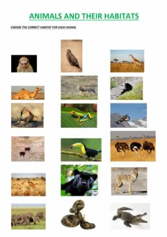 Interactive worksheet Animals and their habitats