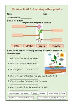 Interactive worksheet Plants and their parts