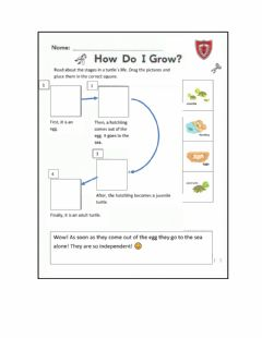 Interactive worksheet Life cycle of a turtle
