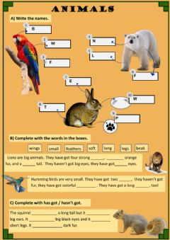 Interactive worksheet Animal Description