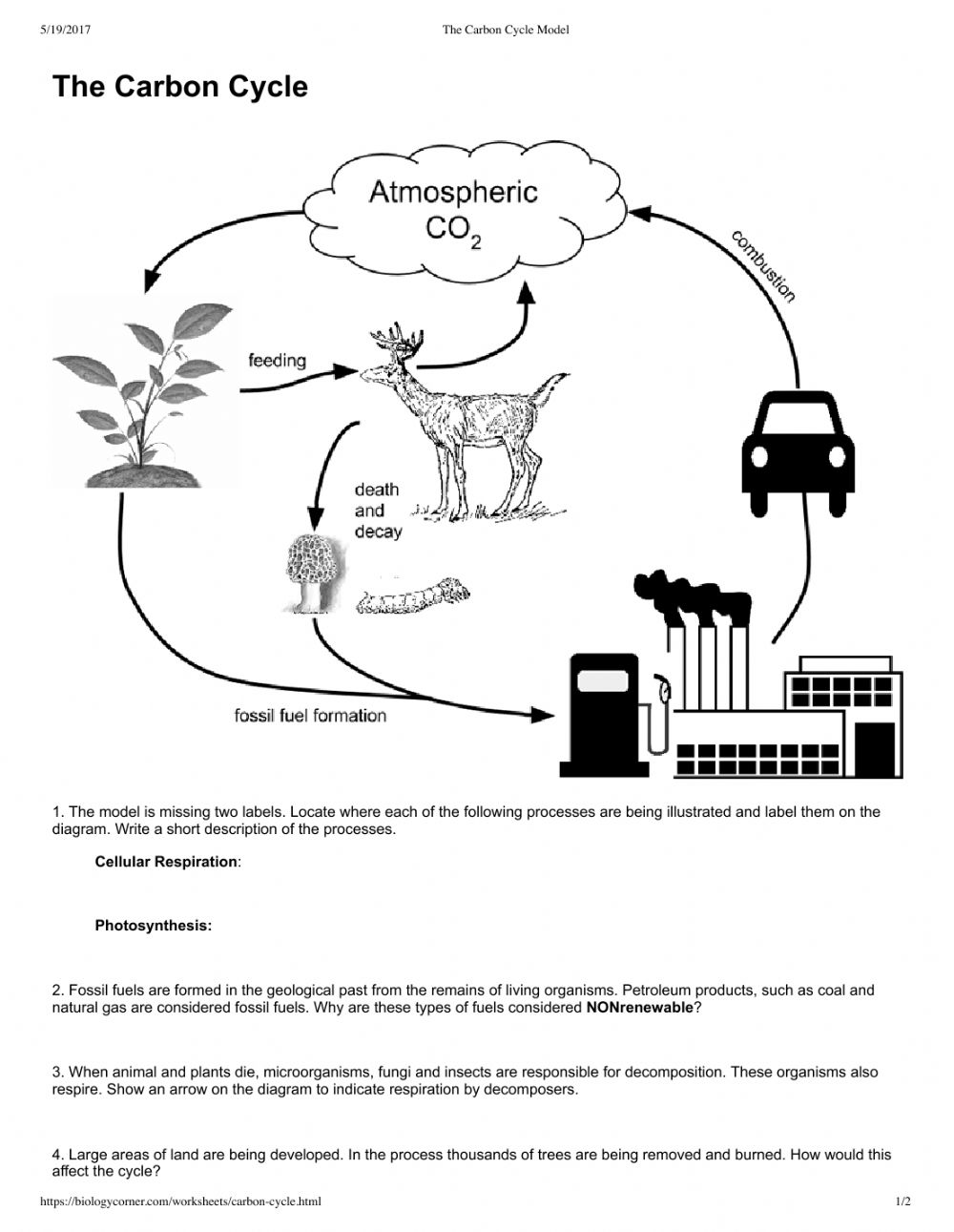 Carbon worksheet on cycle the Carbon cycle