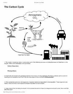 Interactive worksheet Carbon cycle