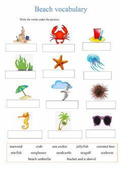 Ficha interactiva Beach vocabulary