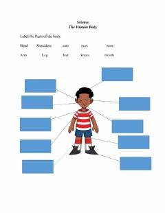 Interactive worksheet The Human Body