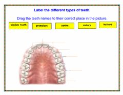 Interactive worksheet Types of teeth and their function