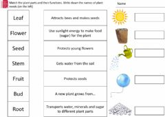 Interactive worksheet Lesson 1. Plants' parts and their functions.