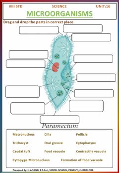 Interactive worksheet 8th science