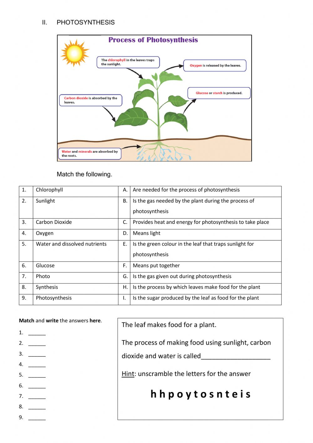 All about plants - Interactive worksheet