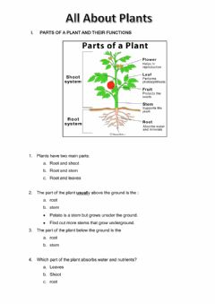 Ficha interactiva All about plants