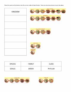 Interactive worksheet Classifying living things