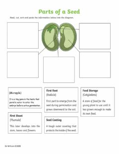 Interactive worksheet Parts of a bean seed