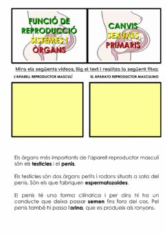 Interactive worksheet L'aparell reproductor masculí