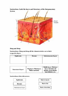 Interactive worksheet Integumentary System