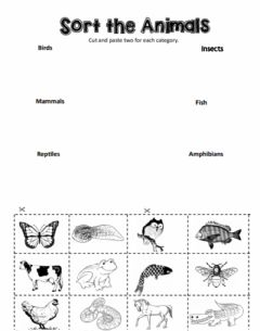 Interactive worksheet Types of Animals
