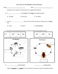 Interactive worksheet Life Cycle of Insects (beginner)