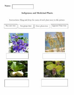 Ficha interactiva Indigenous and medical plants