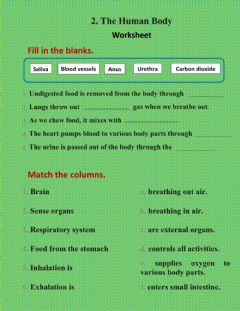 Interactive worksheet Human body