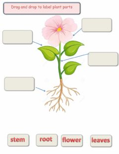 Interactive worksheet Label plant parts