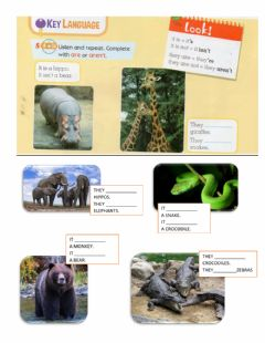 Interactive worksheet It is- they are animals