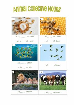 Ficha interactiva Collective Nouns-Animal-Exercise