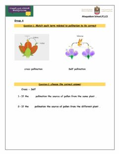 Interactive worksheet Pollination