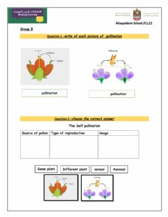 Interactive worksheet Types of pollination