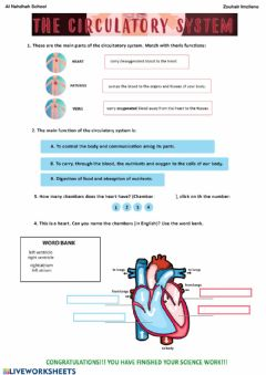 Interactive worksheet Circulatory System