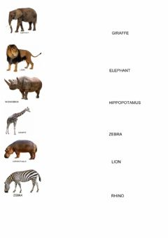 Ficha interactiva Match the animal with its name