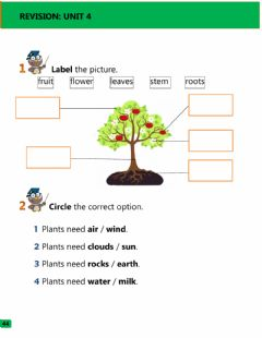 Interactive worksheet What plants need and parts of the plant